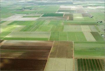 Приватизация земельных участков сельскохозяйственного назначения